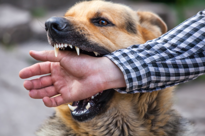 animal bites