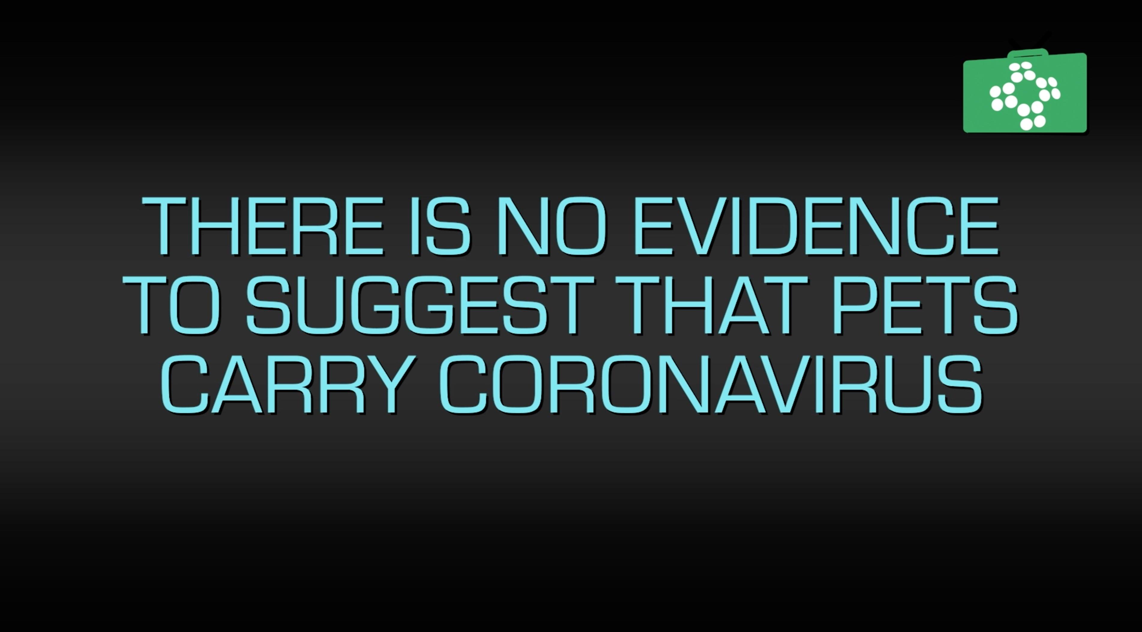 Coronavirus and dogs