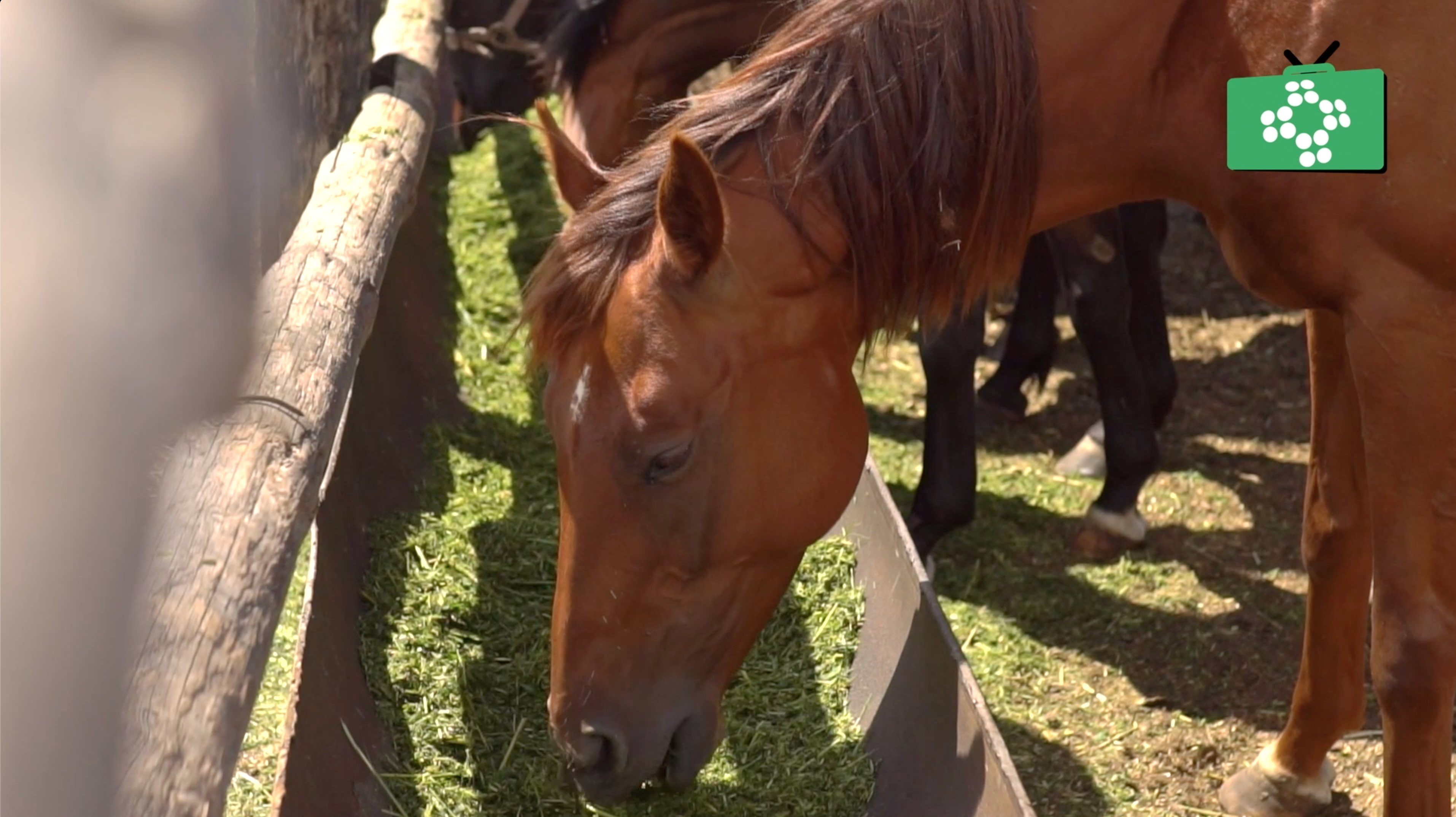 Coronavirus and horses